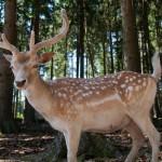 selling deer antlers